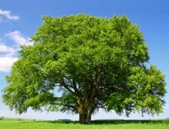 Mobilyada-Gürgen-Ağacının-Özellikleri-Nelerdir